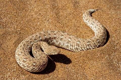جانوران صحرای مصر