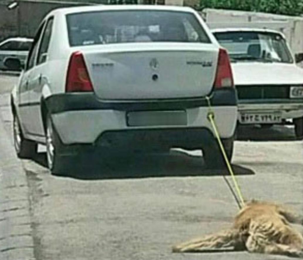 عاملان حیوان آزاری در اردبیل دستگیر شدند