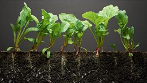 تایم لپس چهل روزه تبدیل دانه به گیاه  اسفناج