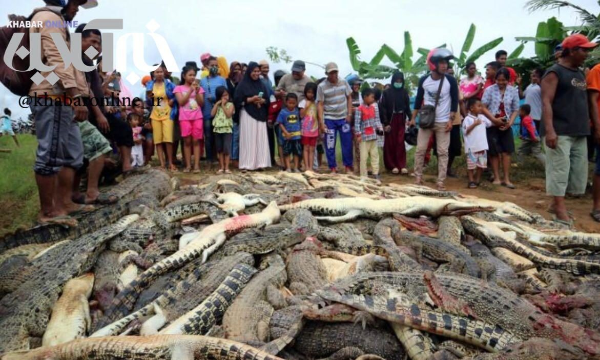 کشتن ۳۰۰ تمساح با چاقو و چکش با انگیزه انتقام