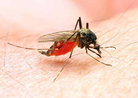 درمان مالاریا با اصلاح ژنتیکی