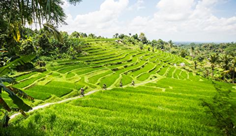 بالی از زاویه دید یک مسافر