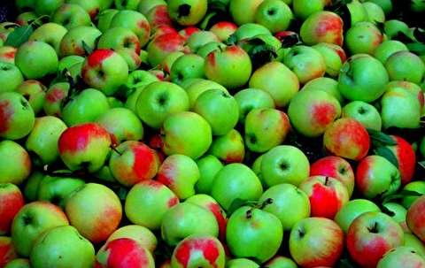 تفاوت قیمت عجیب یک نوع میوه در بازار