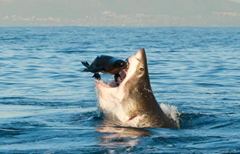 خطرناکترین شکارچیان دریا