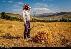 مسئولین هنوز نرخ تضمینی خرید محصولات کشاورزی سال زراعی ۹۸ را اعلام نکرده اند