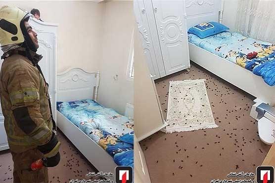 حمله زنبورها به ساختمان مسکونی در عبدلآباد