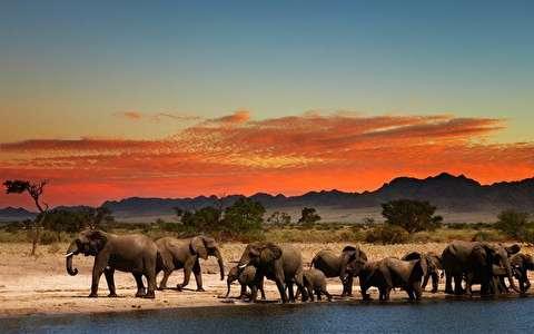 حیات وحش آفریقای جنوبی از نمای نزدیک