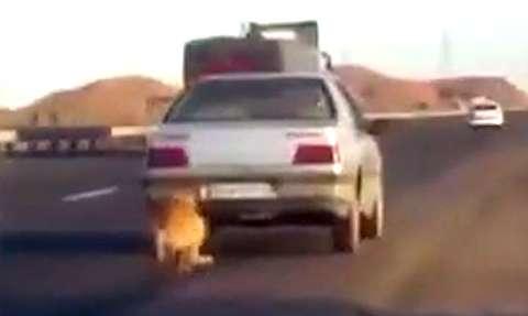 شکنجه بیرحمانه یک سگ توسط راننده پژو!