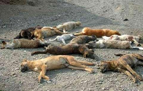 کشف جسد صدها سگ سوخته در اطراف اهواز