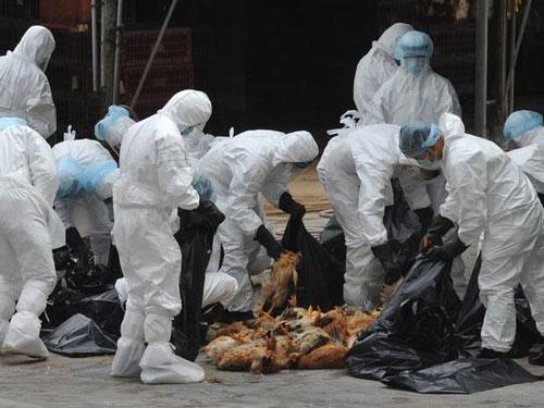 صدور پروانه شکار «بمبافکنهای آنفلوانزا» هم عجیب است و هم خطرناک/ تکرار خسارت چندصد میلیاردی به صنعت مرغداری محتمل است