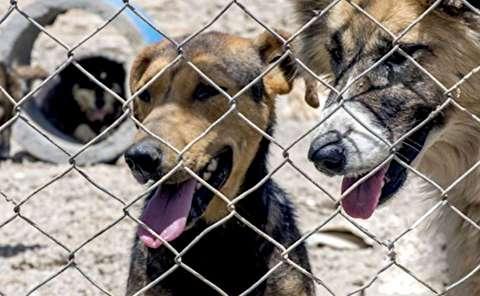 کسی سگ کشی در اهواز را گردن نمیگیرد