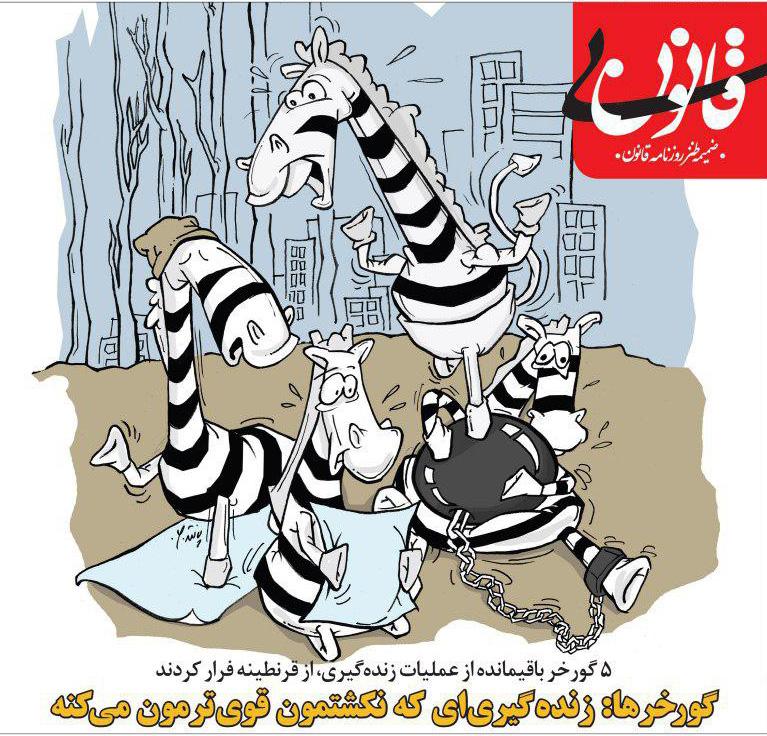 کاریکاتور: فرار جنجالی گورخرها