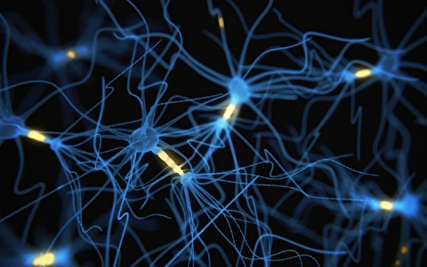 چه عواملی باعث مرگ سلولهای مغزی میشود؟
