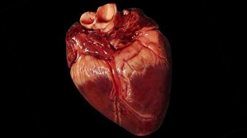 چگونه شکل قلب سمبل عشق شد؟