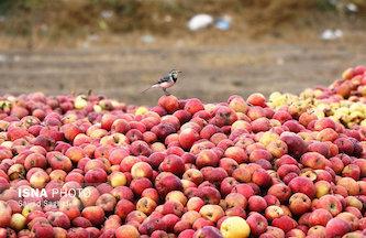 قطب سیب ایران سیب وارد میکند!
