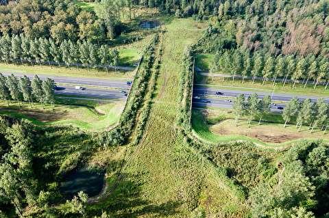 چرا محل عبور حیوانات از روی جاده کمتر ساخته میشود؟