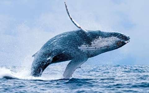 موجسواری با نهنگها