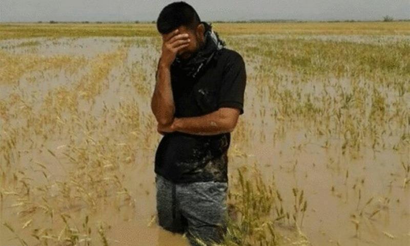 خسارت ۶۷۰۰ میلیارد تومانی سیل به کشاورزی