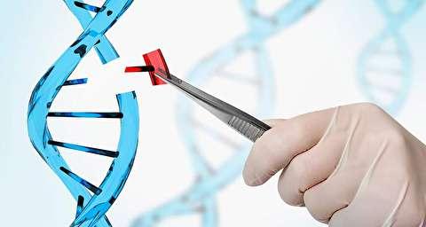 کریسپر چیست و چه نقشی در اصلاح ژنتیکی دارد؟