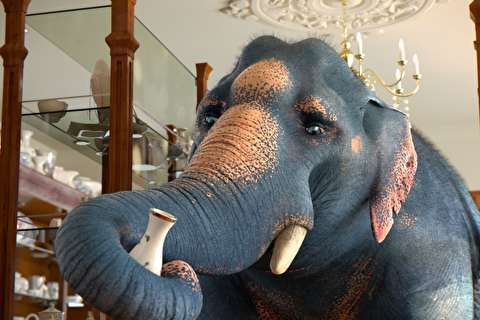 انیمیشن کوتاه مثل یک فیل در چینیفروشی