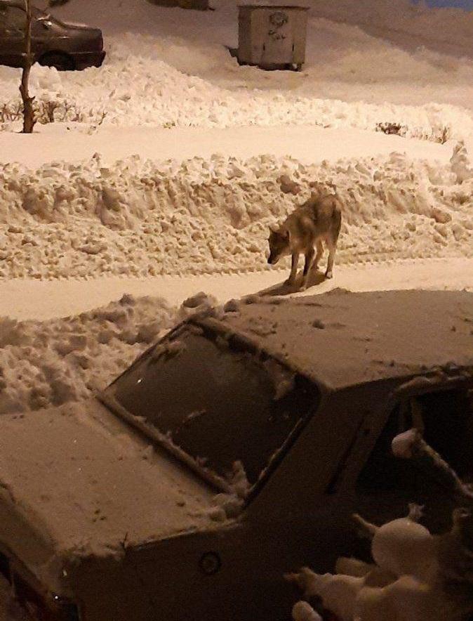 پرسه زدن گرگهای گرسنه در خیابانهای خلخال