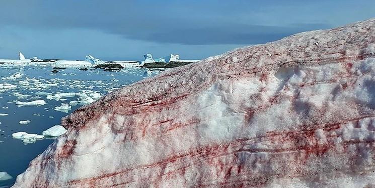 برف صورتی در قطب جنوب