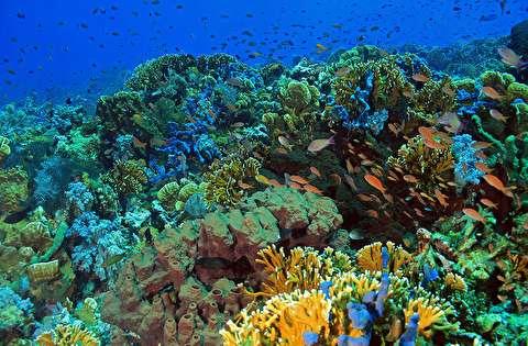 شنا با آبزیان جزیره کومودو