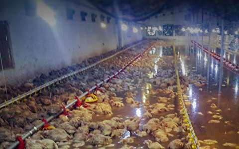 مرغهایی که سیل برد و رمضانی که در راه است
