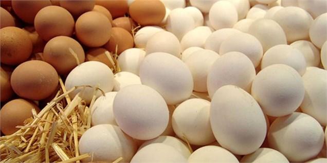 قیمت تخم مرغ در بازار به ثبات رسید