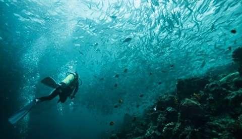 طبیعت زیر آب دماغه امید نیک