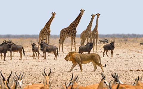 حیات وحش نامیبیا در قالب 4K