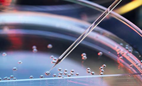سلولهای بنیادی چگونه عمل میکنند؟