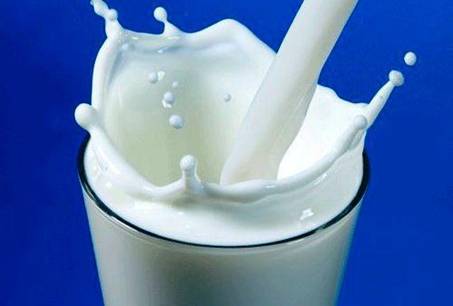 چرا شیر خوردن ناشتا برای سلامت بدن مضر است؟