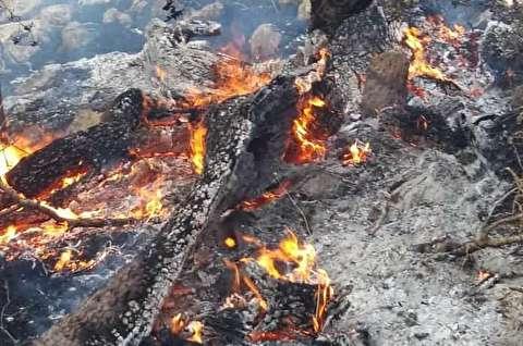 زیستگاه گونههای شاخص جانوری ایران سوخت