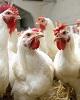 با تصمیم جدید وزارت جهاد کشاورزی، باید شاهد جهش دوباره...