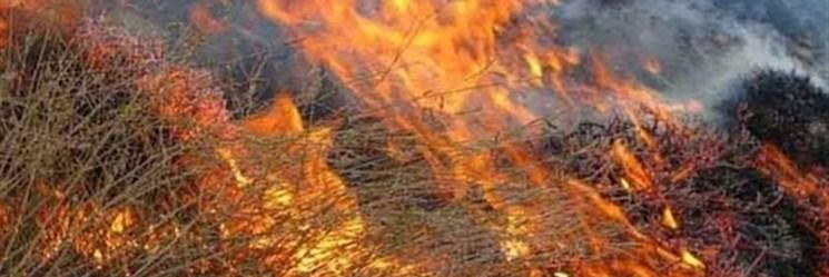 آتش تالاب هامون را فرا گرفت