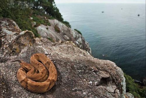 ترسناکترین جزیره دنیا