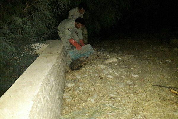 نجات شغال گرفتارشده در حوضچهای در پلدختر
