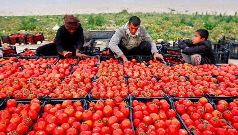 مقصر گرانی گوجه که سرما شد، مقصر گرانی بقیه کالاها کیست؟