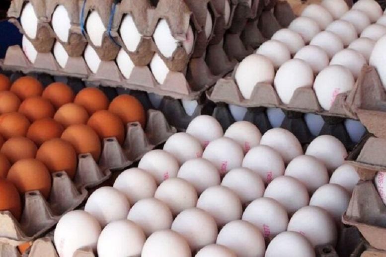 مردم بادمجان هم نمیتوانند بخرند، چه برسد به تخممرغ!