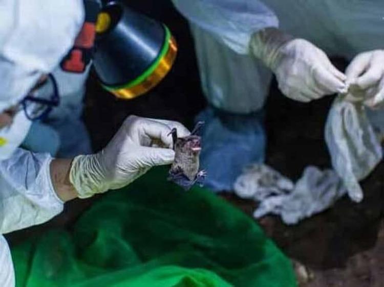 ویروس جدیدی که خفاشها در اروپا منتشر کردهاند