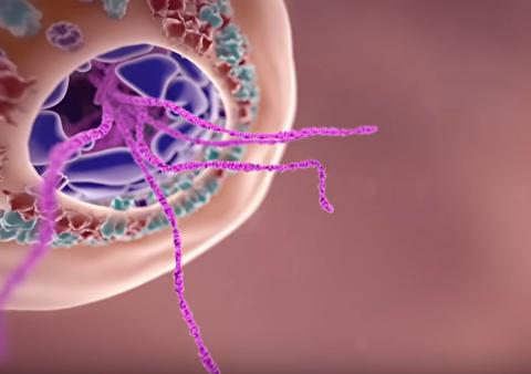 چگونه ویروس کرونا انسان را بیمار میکند؟