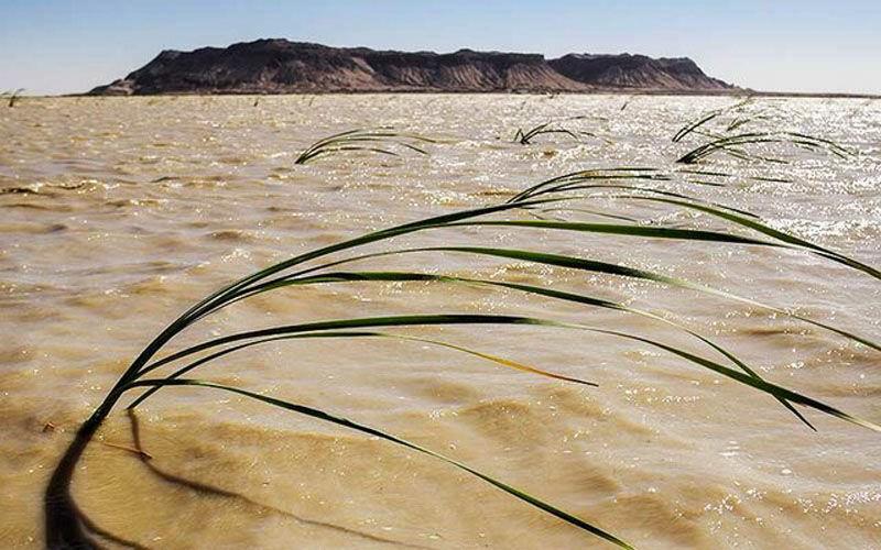 نفسهای تازه «هامون» پس از خشکسالی طولانی