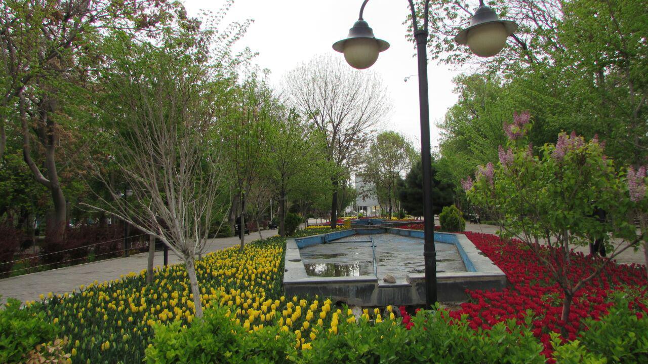 گلدهی گلهای لاله در باغ گلستان تبریز