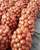 قیمت پیاز در نبود تدبیر دولت، اشک کشاورزان را درآورد/...