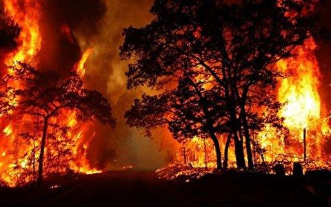 آتش سوزی جنگلهای زاگرس