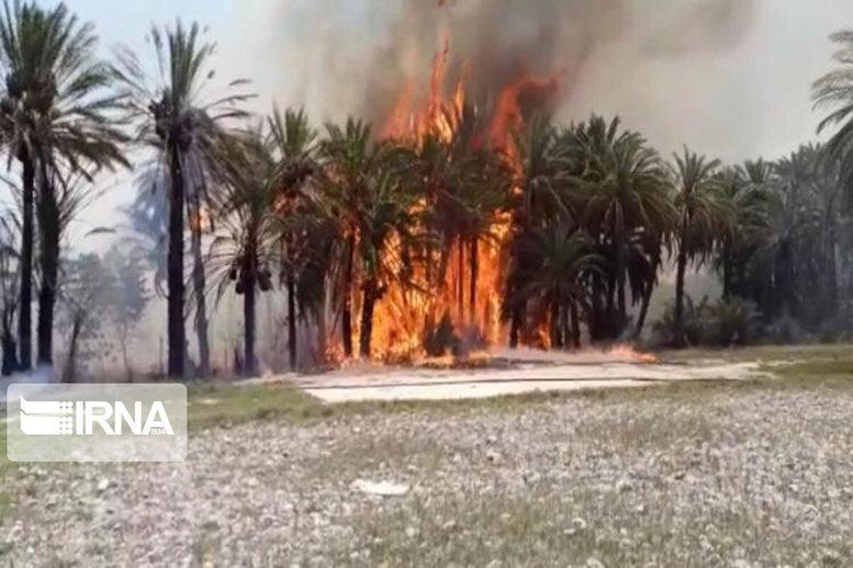 ۵۵۰ اصله درخت خرما در دلگان در آتش سوخت