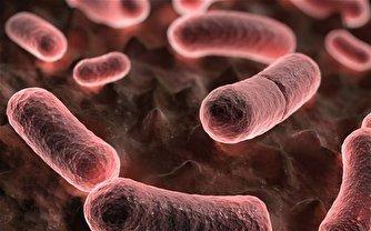 افزایش التهاب در جامعه کرونا زده با «طاعون خیارکی»!
