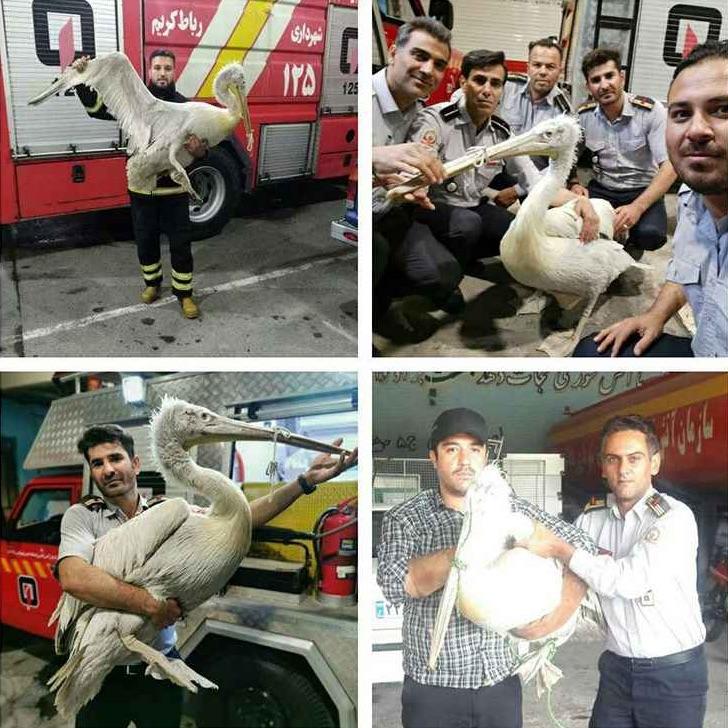 فرود پلیکان غول پیکر در منزل مسکونی نزدیک تهران