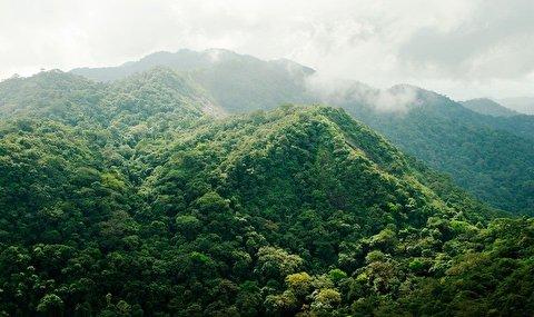 گذری در جنگلهای سیرالئون